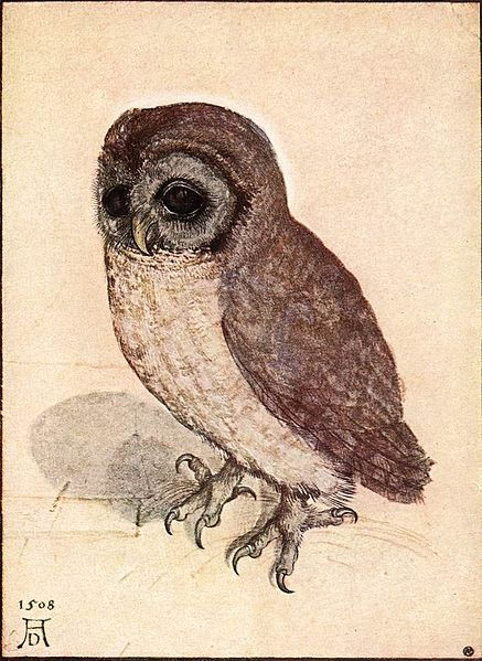 From his close examinations of the living world, an owl by the 15th century German artist Albrecht Durer