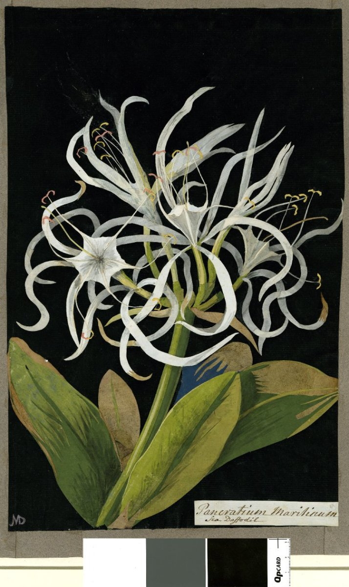Art and Science 2: Botanical Illustration and Beautiful Illusion