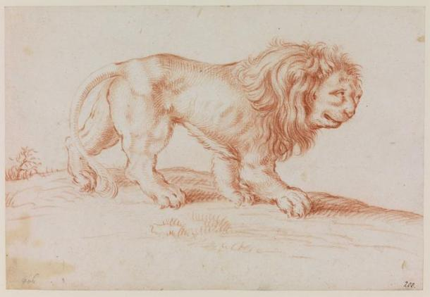 A late 17th Century Dutch representation of a lion from UCL Art Museum