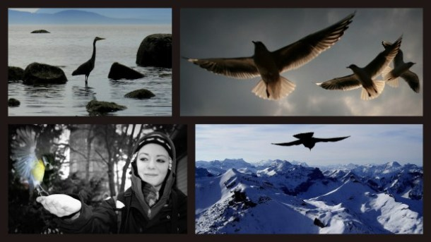 Some of my more successful photographs. - 1) Heron - Washington State, USA. 2) Little Gulls - London, UK. 3) Great Tit - Stockholm, Sweden. 4) Alpine Chough, Wengen, Switzerland.