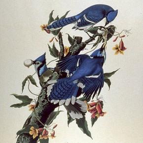 Art and Science 5: John James Audubon and his AmericanBirds
